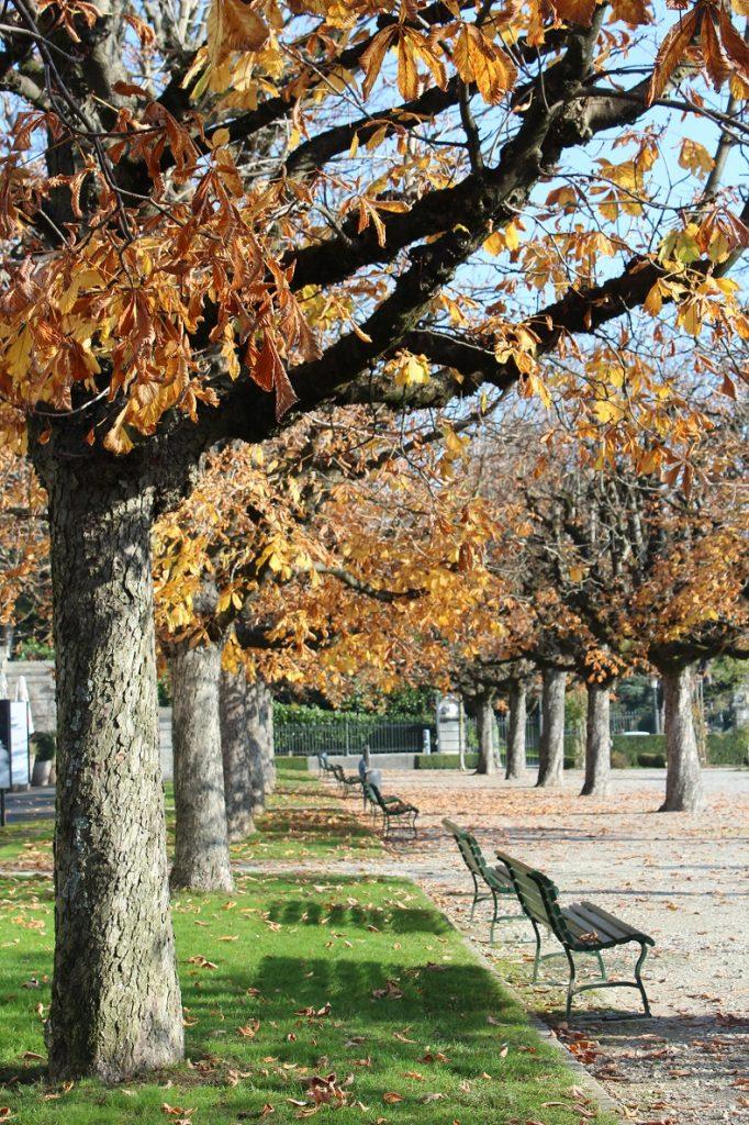 losanna_in_autunno_alberi