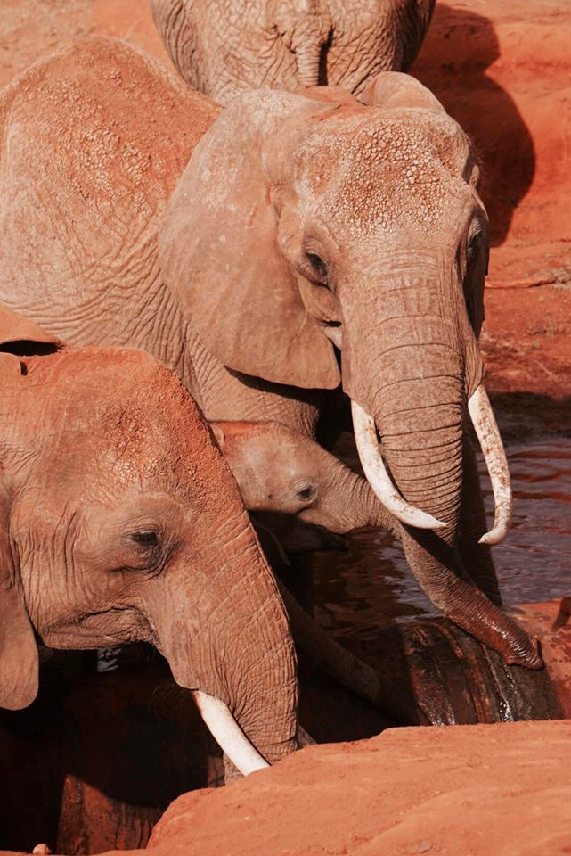 safari_kenya_travel_blogger_elefanti_tsavo_est