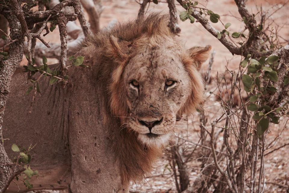 safari_kenya_travel_blogger_leone_tsavo_est