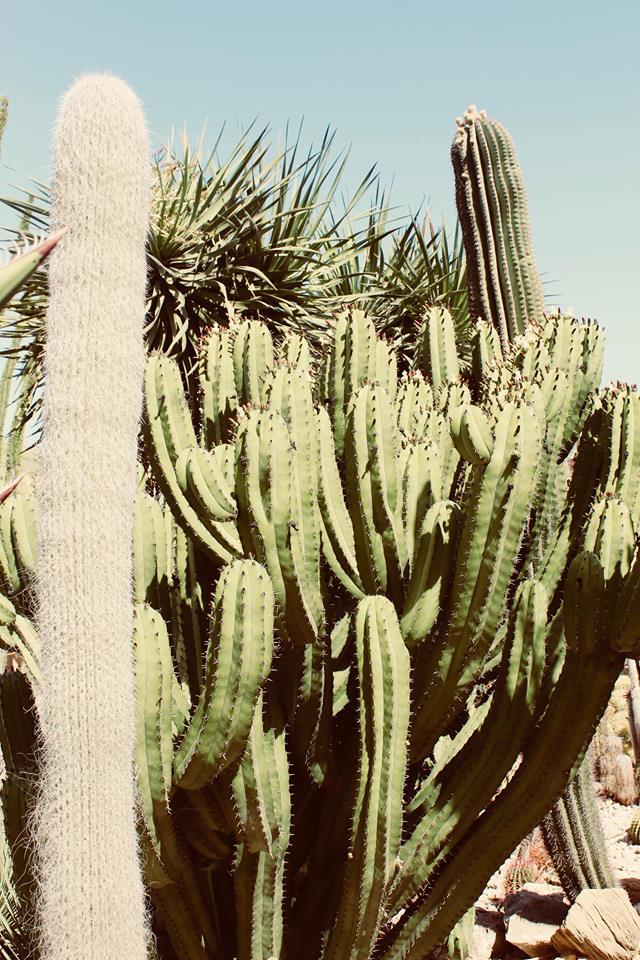garden_cactus_favara_b&B