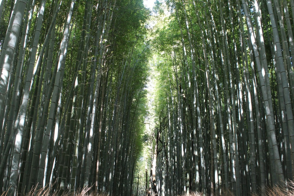 bamboo_giappone