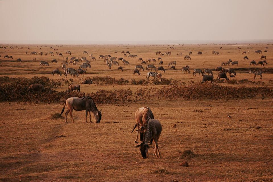 safari_kenya_travel_blogger_animali_amboseli