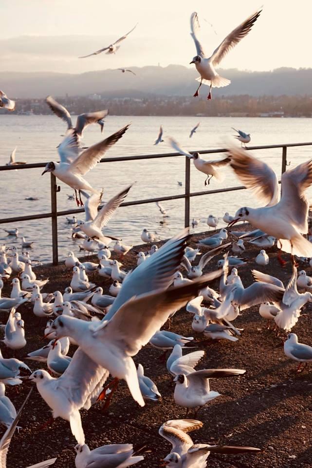 zurigo_lungo_lago_gabbiani_travel_guida_raffaellacatania