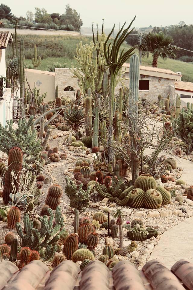 garden_cactus_favara