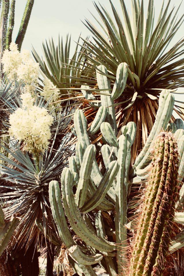 garden_cactus_favara_b&B_cactus_decennali
