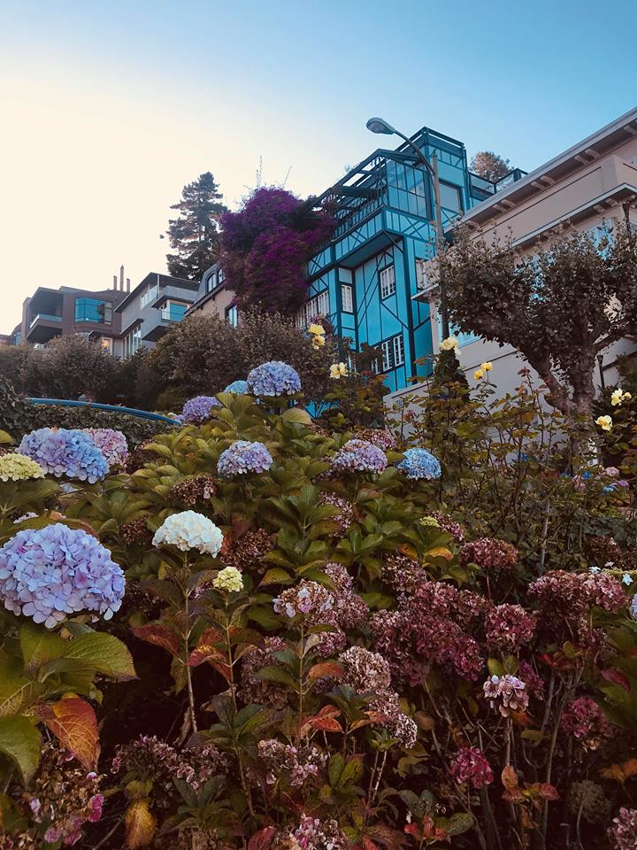 sanfrancisco_lombard_street_flowers